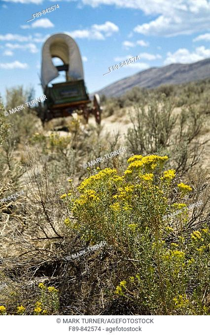 Reproduction covered wagon among Gray Rabbitbrush & Sagebrush on Oregon Trail