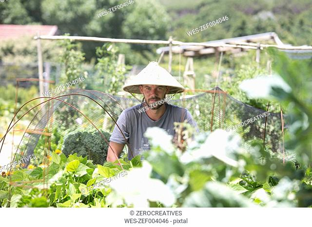 Gardener with Asian hat at work