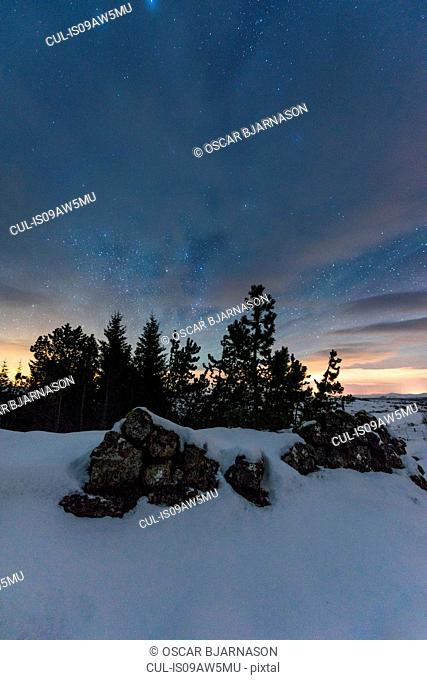 Forest of evergreen trees and stacks of rocks under starry night sky, Thingvellir, Iceland