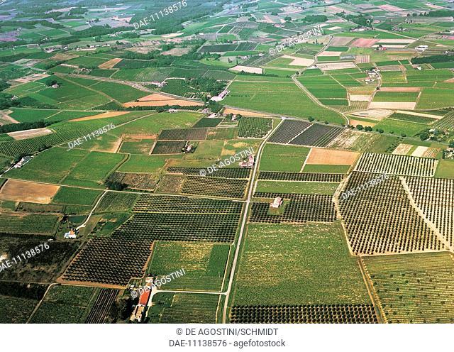 Aerial view of the vineyards around Bergerac, Dordogne, Aquitaine, France