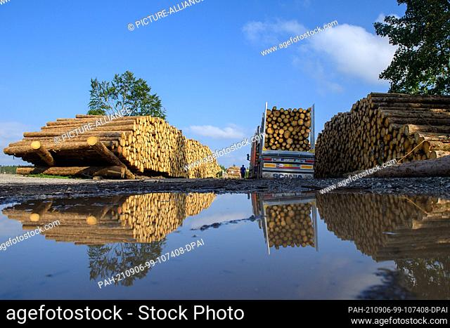 02 September 2021, Saxony-Anhalt, Oberharz am Brocken: A truck loaded with logs stands next to felled and stacked logs. The drought of 2019 and 2020 and the...