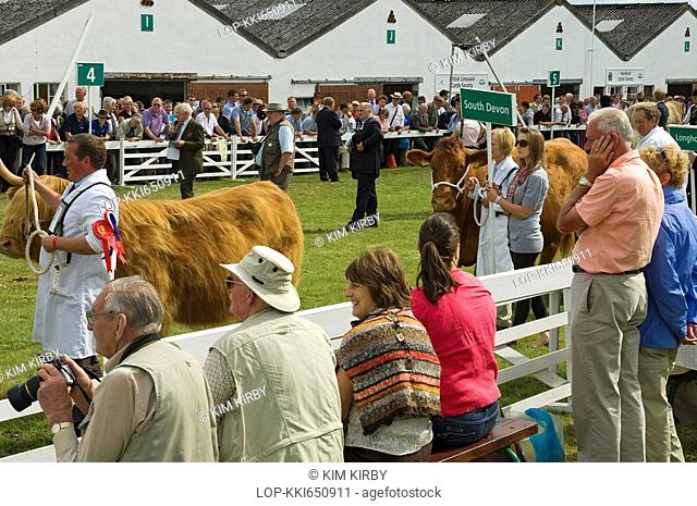 England, North Yorkshire, Harrogate, Parade of cattle at the Great Yorkshire Show