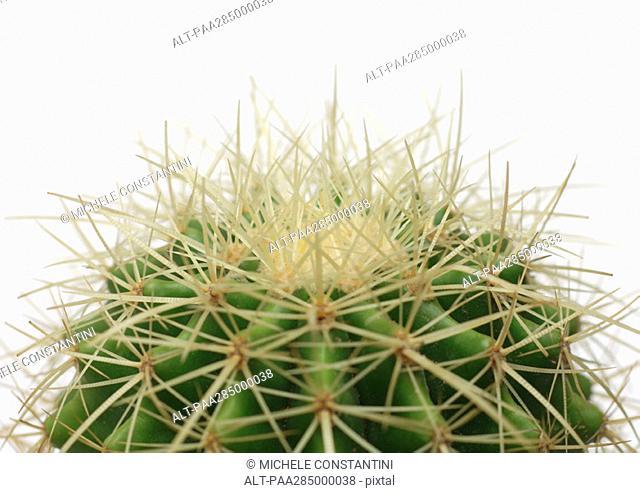 Cactus, close-up