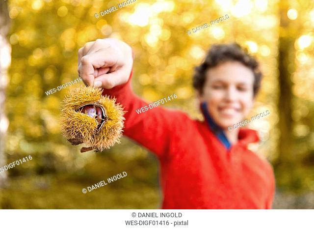 Hand of boy holding sweet chestnut in the autumnal forest