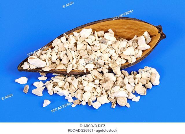 Dahurian Angelica, Angelicae dahuricae Radix, Bai Zhi, cut out, object