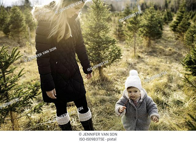 Mother and baby girl in Christmas tree farm, Cobourg, Ontario, Canada