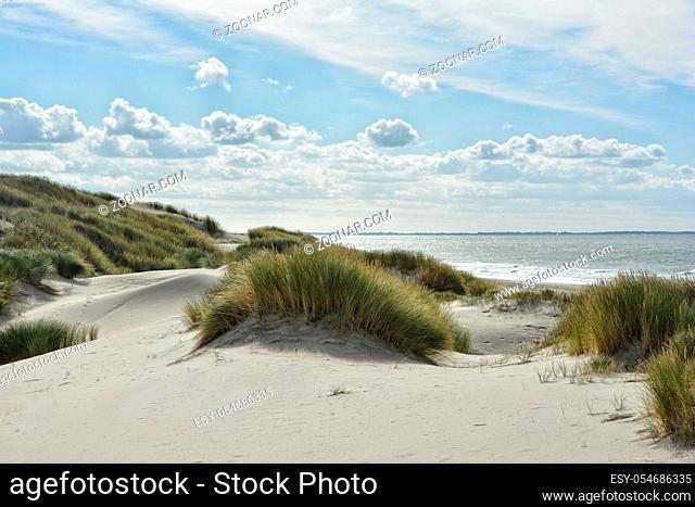 Duenen an der niederlaendischen Nordseekueste