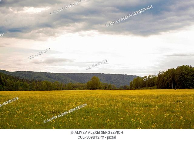 Tree covered mountain across field landscape, Ural, Russia