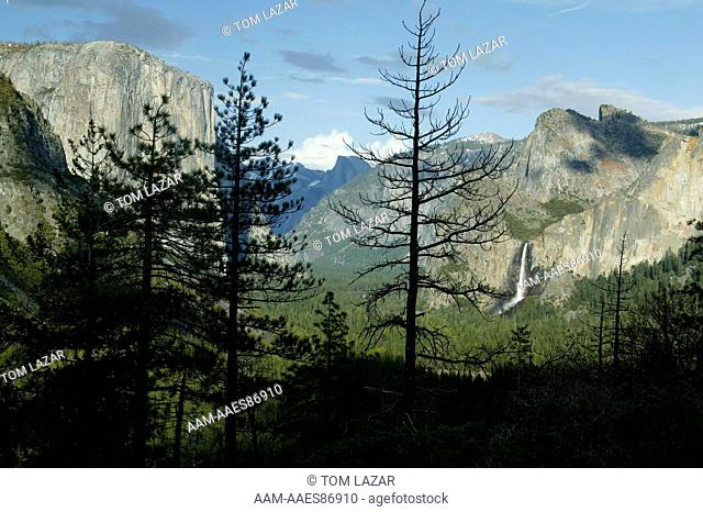 Yosemite National Park, California; Sierra Nevada Mountains; Pines trees silhouetted against view of Yosemite Valley and El Capitan, Bridalveil Falls