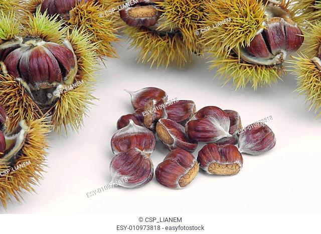 sweet chestnut 02