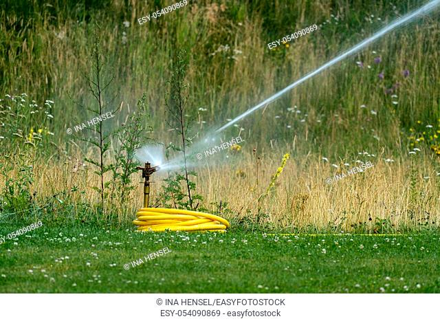 Watering the lawn in summer with a lawn sprinkler