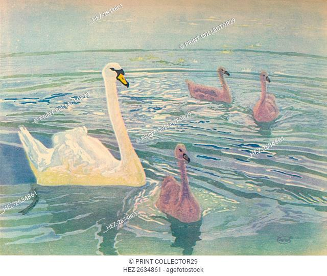 'Swan and Cygnets', 1911, (1928). Artist: William Giles
