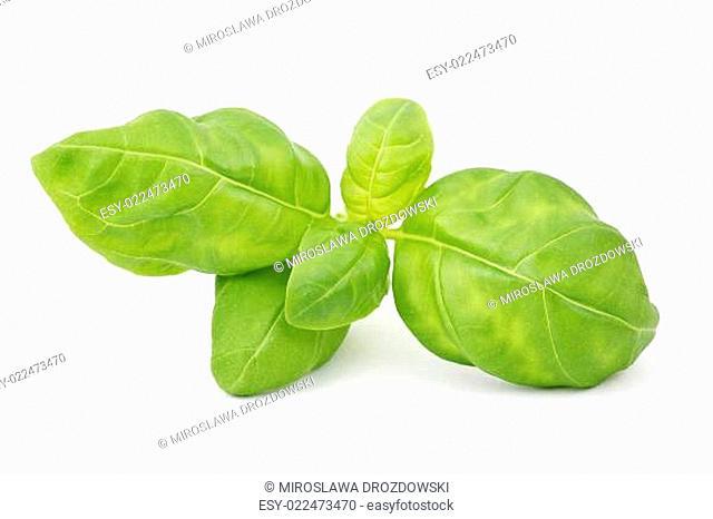 sprig of fresh basil