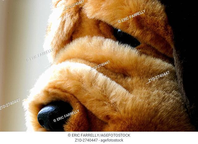 Soft toy dog for children