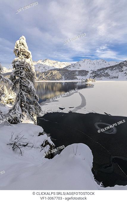 Snow covered trees on the shore of frozen Lake Sils, Plaun da Lej, Maloja Region, Canton of Graubunden, Engadin, Switzerland