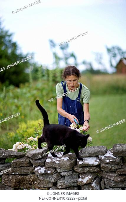 Woman pruning flowers in garden with cat