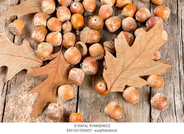 Autumn oak leaves and acorns on the abstract background