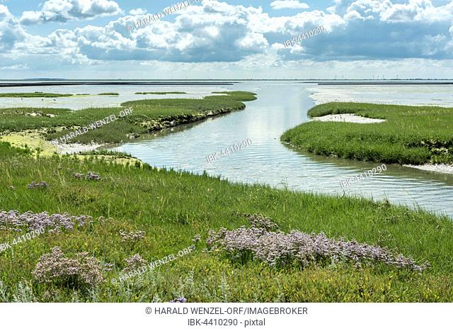 Embankment foreland Hamburger Hallig, nature reserve, national park Wadden Sea, UNESCO World Heritage Site, Reußenköge, Schleswig-Holstein, Germany