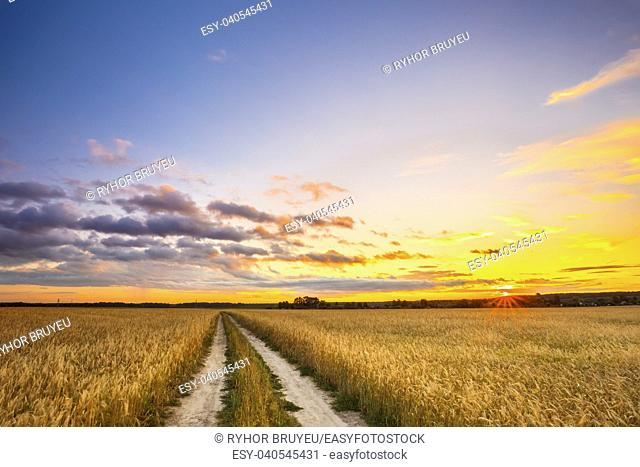 Rural Countryside Road Through Wheat Field. Yellow Barley Field In Summer. Agricultural Season, Harvest Time