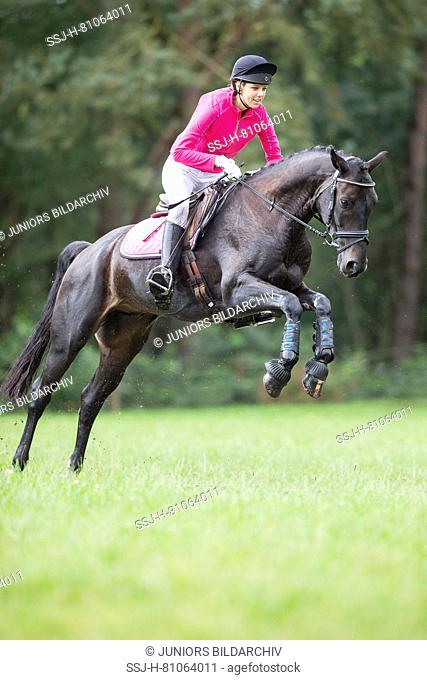 Hanoverian Horse. Rider clearing an obstacle during a cross-country ride. Germany