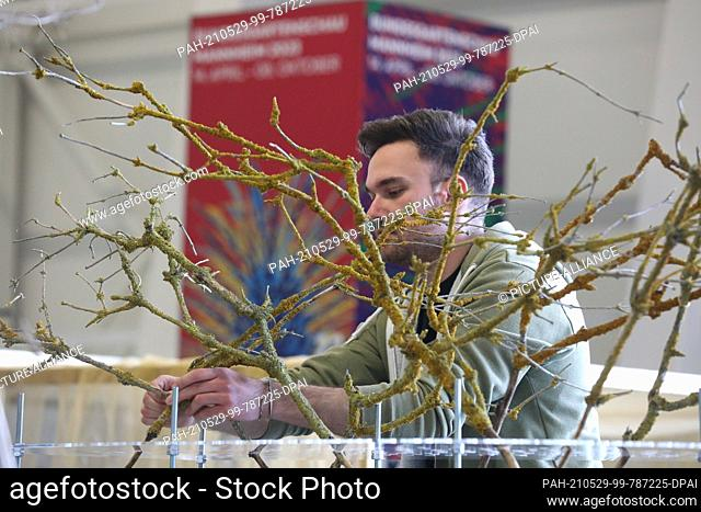 """29 May 2021, Thuringia, Erfurt: Florist Michael Fink works on the competition project """"""""Dianthus"""""""" at the State Championship of Florists Hesse-Thuringia at the..."""