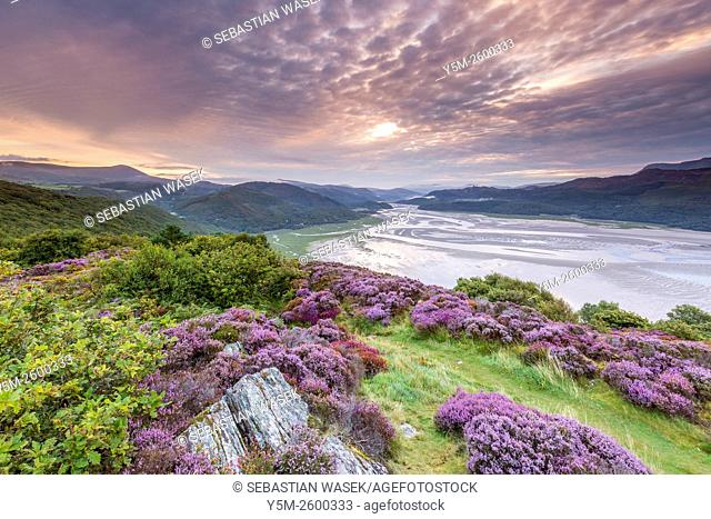 Mawddach Estuary seen from the Panorama Walk above Barmouth, Gwynedd, Wales, United Kingdom, Europe