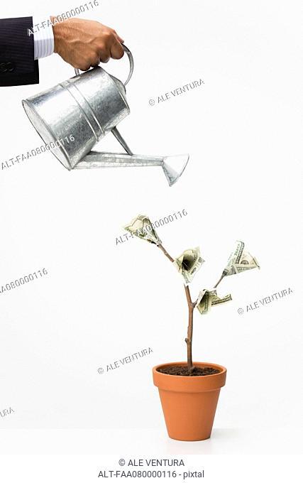 Businessman watering money tree, cropped