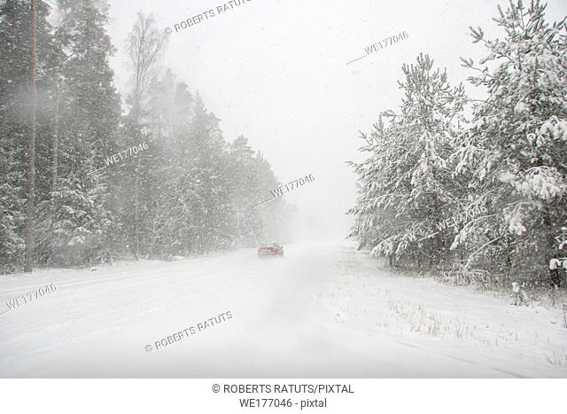 Beautiful landscape of the forest on a cold winter day with trees covered with snow. Snowfall in the forest in Latvia. Country road covered with snow
