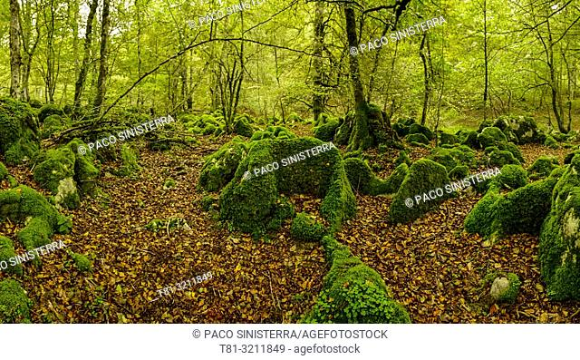 Selva de Irati, Irati Forest, Navarre, Spain