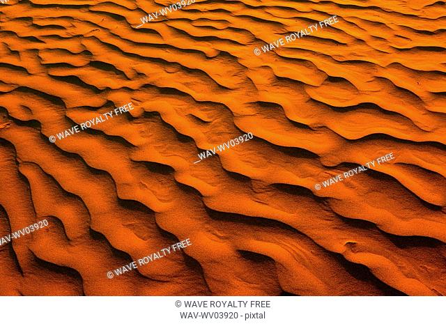 Desert-like conditions in the fragile ecosystem of the Great Sand Hills of Saskatchewan, Canada