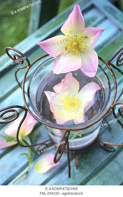 Flowers in glass of water