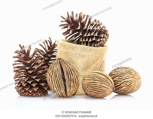 Cerbera oddloam's seed, Pong pong seed or Othalanga - Suicide tree seed and cedar pine cone in sacks fodder on white