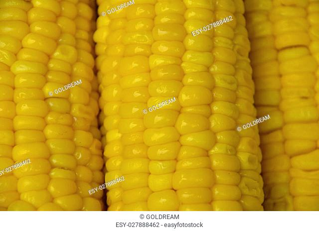 Background yellow boiled corn texture