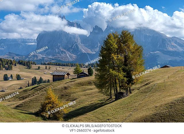 Alpe di Siusi/Seiser Alm, Dolomites, South Tyrol, Italy. Autumn colors on the Alpe di Siusi/Seiser Alm with the Sassolungo/Langkofel and the...