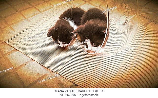 Kittens, Miajadas, Extremadura, Caceres
