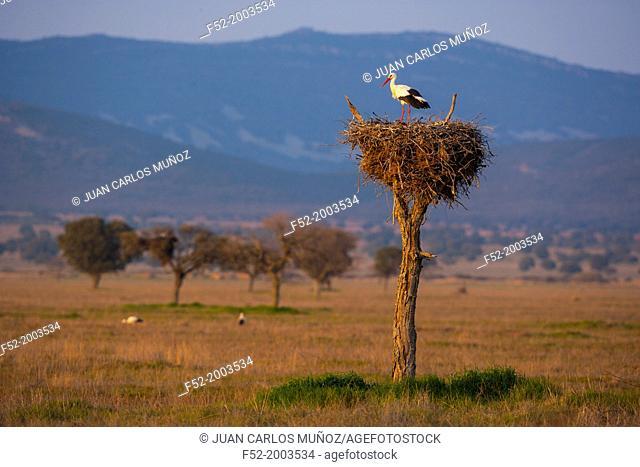 Cabañeros National Park, Montes de Toledo, Ciudad Real Toledo, Castilla-La Mancha, Spain, Europe