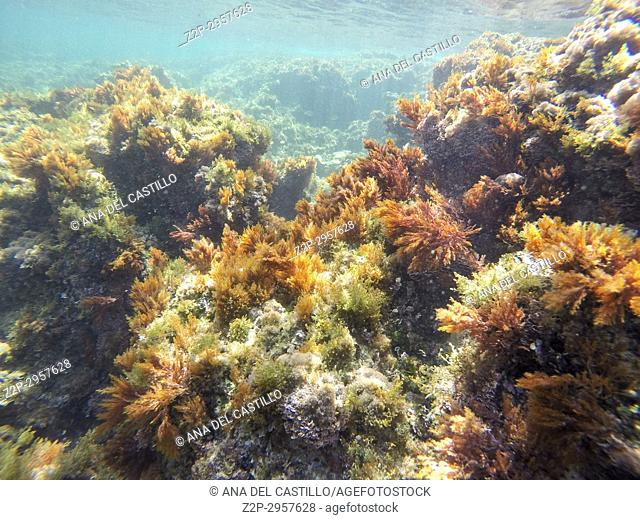 Underwater image in Las Rotas beach Natural park in Denia Alicante Spain