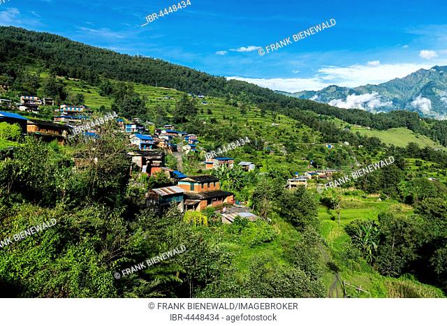 Houses in agricultural landscape with green terrace rice fields, Chitre, Upper Kali Gandaki valley, Myagdi District, Nepal