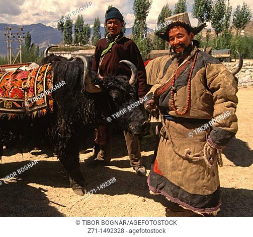 India, Ladakh, Leh, herdsmen with a yak
