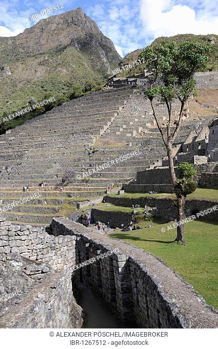 Zona agricola terraces, Inca settlement, Quechua settlement, Machu Picchu, Peru, South America, Latin America