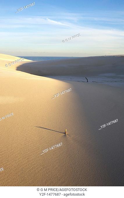 twigs in seaside sand dune, Australia