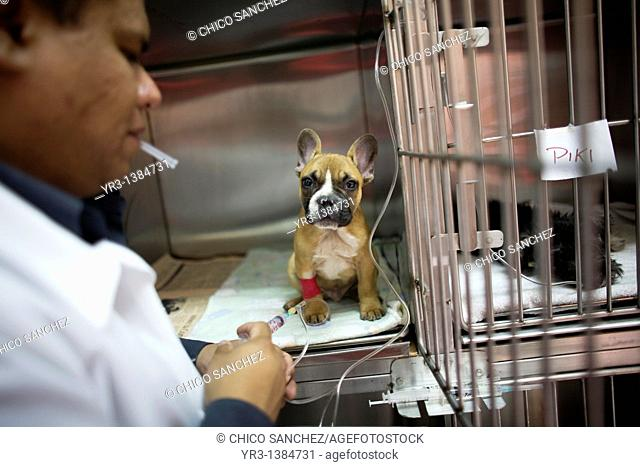 A veterinarian gives food to a puppy at a Pet Hospital in Condesa, Mexico City, Mexico, February 21, 2011