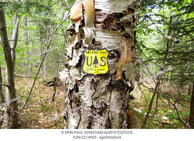 US National Forest boundary bearing tree marker in the Stark Falls Brook drainage of Kinsman Notch in Woodstock, New Hampshire USA
