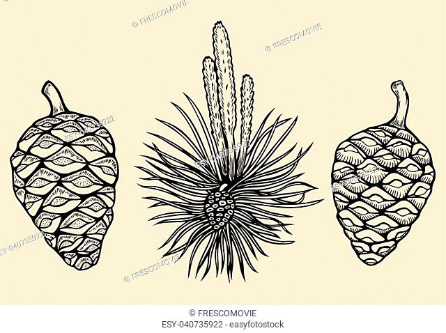 Forest collection of coniferous branches and pine cones isolated on white background. Hand drawn design vector elements