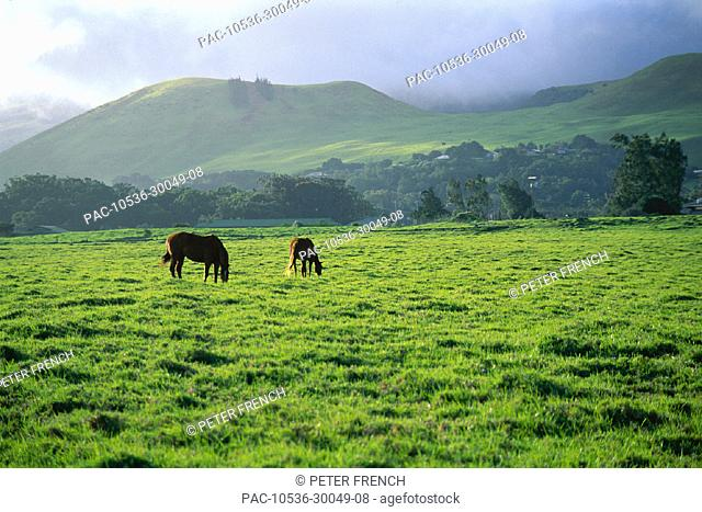 Hawaii, Waimea, Parker Ranch beautiful landscape w/ pair of horses, hills & misty sky
