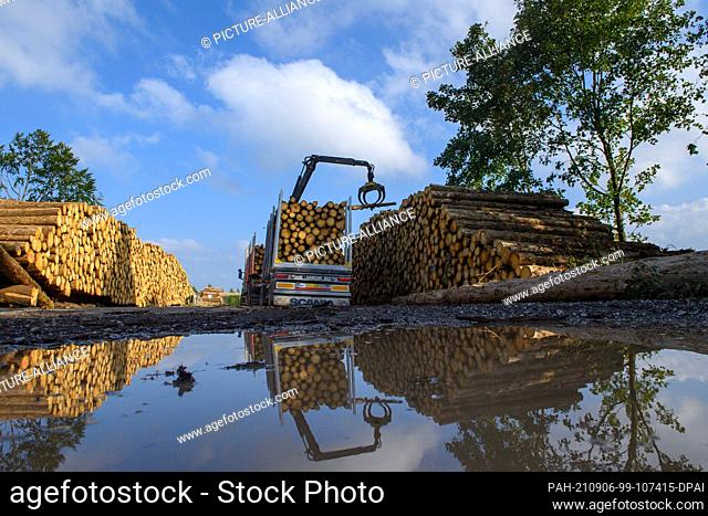 02 September 2021, Saxony-Anhalt, Oberharz am Brocken: A crane loads a truck with logs of dead and cleared conifers. The drought of 2019 and 2020 and the bark...
