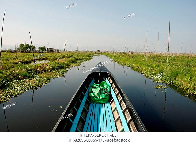 Boat in channel between floating vegetable gardens, Inle Lake, Shan State, Myanmar, January