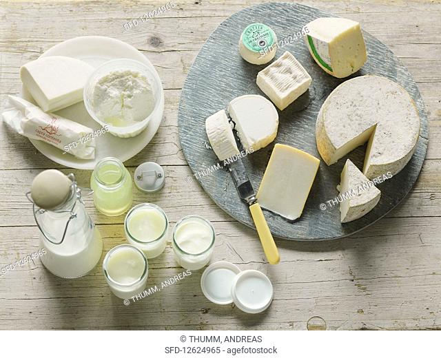 Various types of goat's cheese and goat's milk products