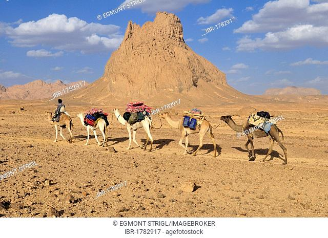 Camel train, caravan, in the volcanic landscape of Hoggar, Ahaggar Mountains, Wilaya Tamanrasset, Algeria, Sahara, North Africa