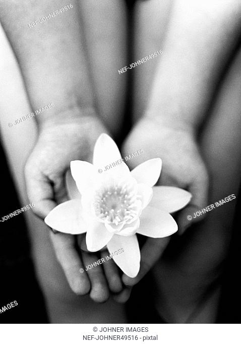 Lotus flower hand stock photos and images age fotostock lotus flower on hands close up mightylinksfo
